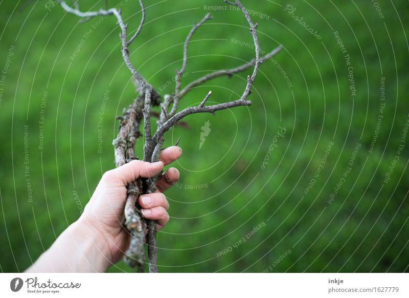 Äste Natur grün Sommer Hand Gras Holz Garten Ast festhalten trocken ansammeln Zweige u. Äste Brennholz