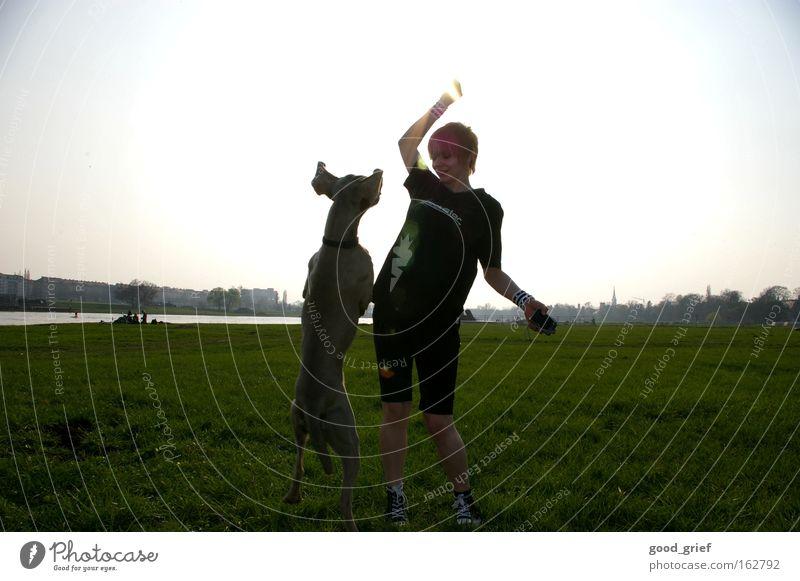 [DD|Apr|09] Lichtfangen Hund Sonne Elbe Dresden Frau Wiese Elbufer Gras springen Freude Fitness Säugetier tia