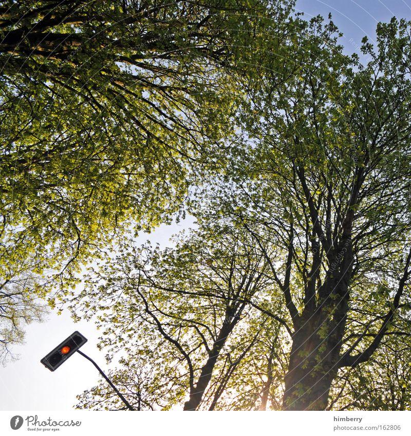 es wird grün Natur Baum Sommer gelb Frühling Straßenverkehr Design Beginn Verkehr Lifestyle Wachstum Technik & Technologie Wandel & Veränderung Neugier