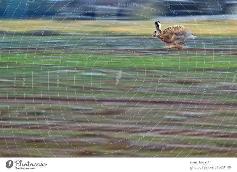 Lauf Forrest! Natur grün Landschaft Tier Umwelt Leben Bewegung braun Feld Angst Erde Wildtier laufen Geschwindigkeit bedrohlich Abenteuer