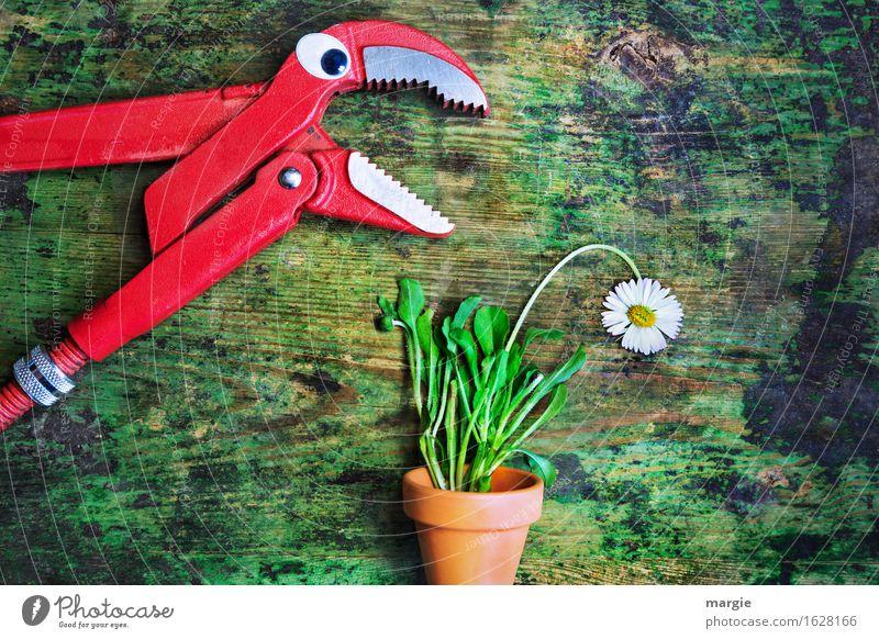 """""""Stell dich nicht so an"""": eine Zange mit Augen spricht mit einem Gänseblümchen im Blumentopf Arbeit & Erwerbstätigkeit Handwerker Gartenarbeit Arbeitsplatz"""