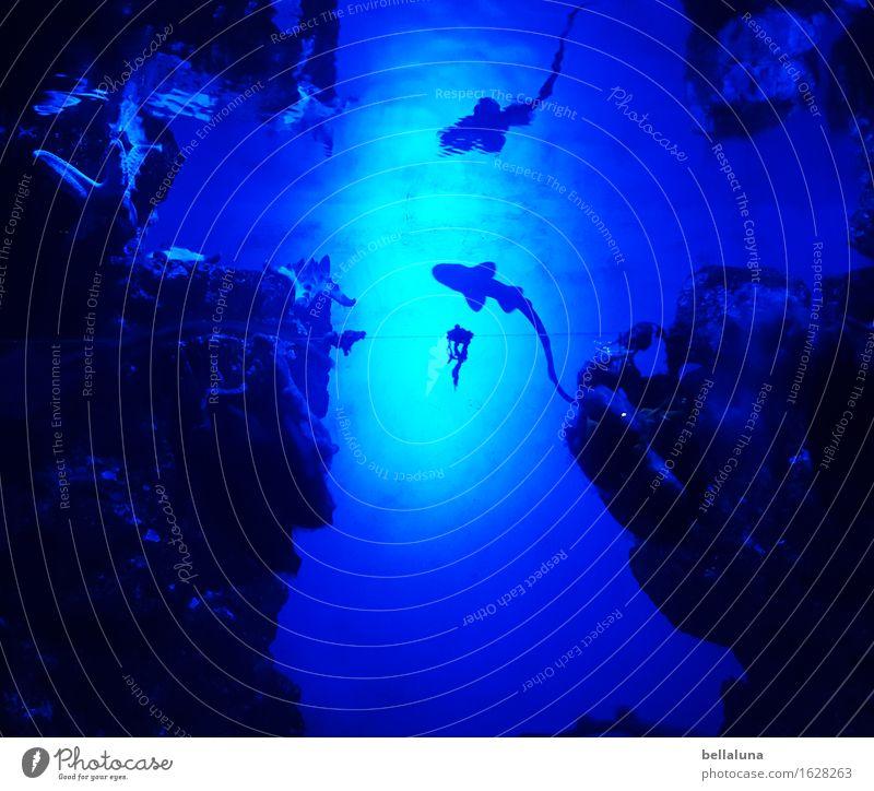 Kleiner Hai dümm, dümm, düdümdedümmm... Natur blau Sommer Wasser Meer Tier dunkel kalt Umwelt Frühling natürlich Schwimmen & Baden Felsen wild elegant frei