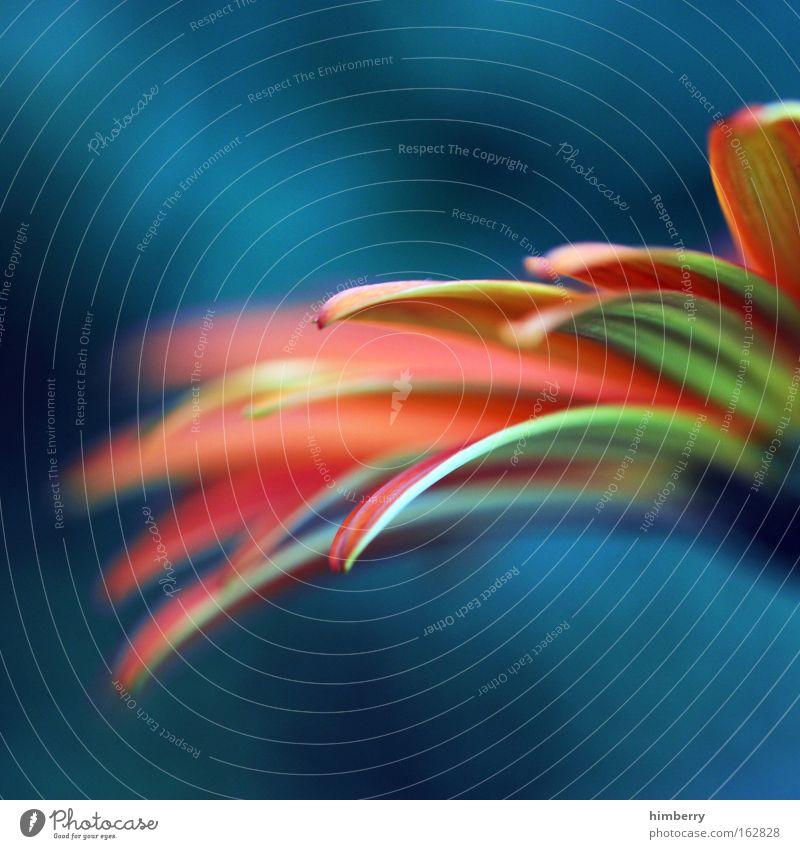 flashfarben Natur blau rot Pflanze Blume Farbe Blüte Frühling Park Kunst Hintergrundbild Design frisch außergewöhnlich verrückt Dekoration & Verzierung