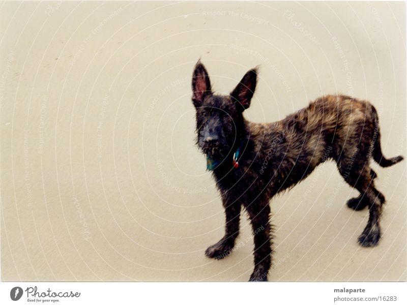 Dog_01.jpg Strand Hund Verkehr