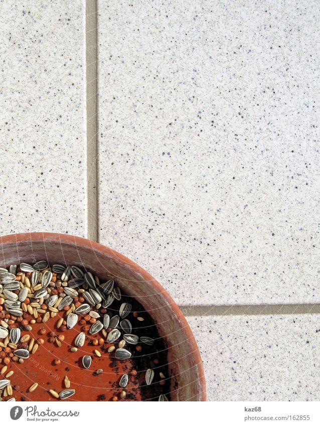 Frühstück Futter Vogel Ernährung Fliesen u. Kacheln Schalen & Schüsseln Hülle Korn Getreide Samen Kerne Appetit & Hunger Ton