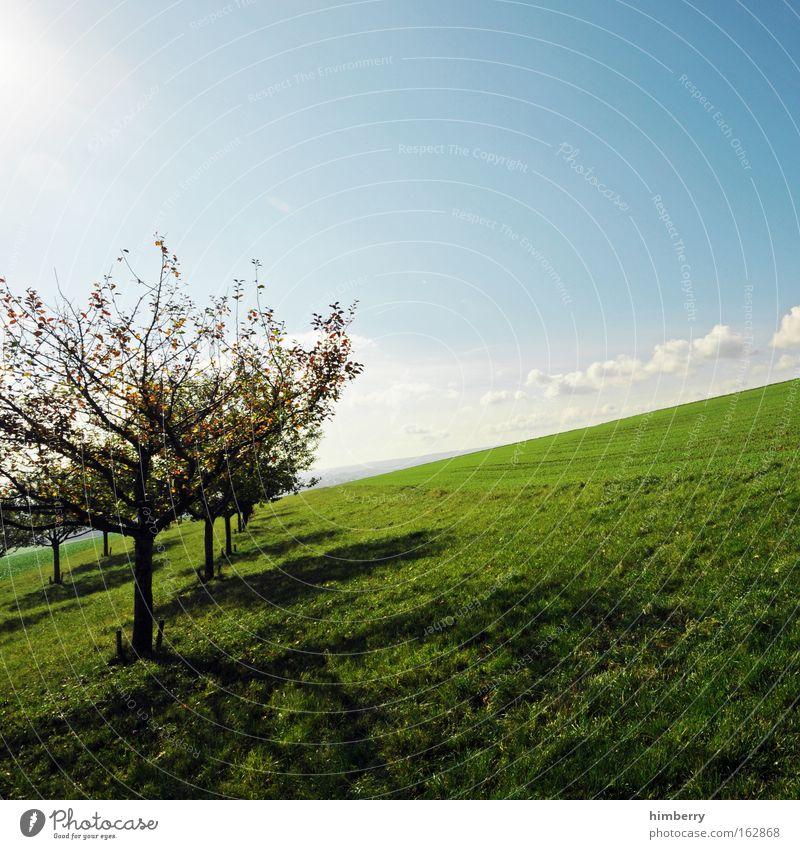 auf gehts Himmel Natur grün Baum Pflanze Sommer Wolken Wiese Landschaft Berge u. Gebirge Gefühle Freiheit Gras natürlich groß frisch