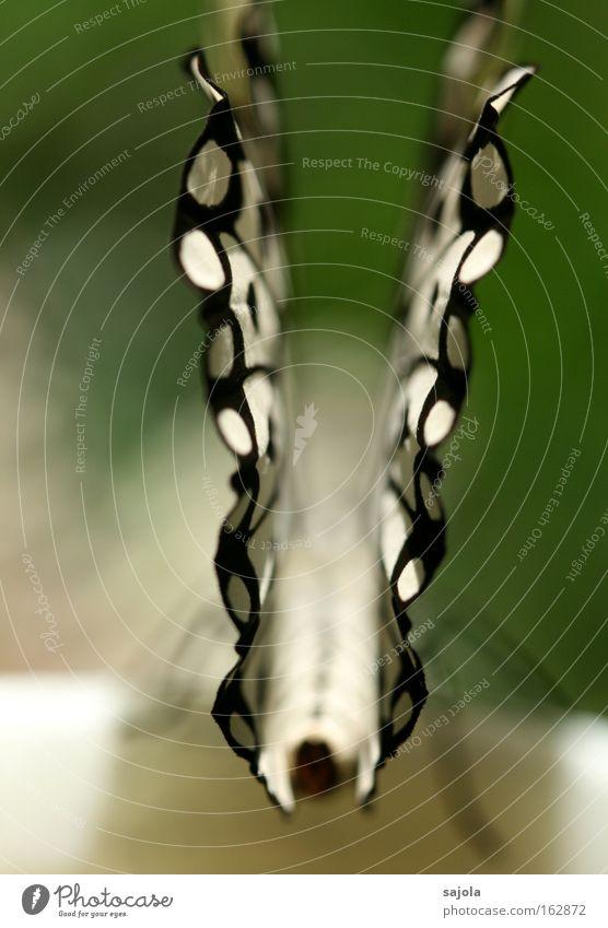 \./ Tier Schmetterling Flügel 1 ästhetisch schwarz weiß schön Insekt zart zerbrechlich Hochformat Farbfoto Nahaufnahme Detailaufnahme Makroaufnahme Muster