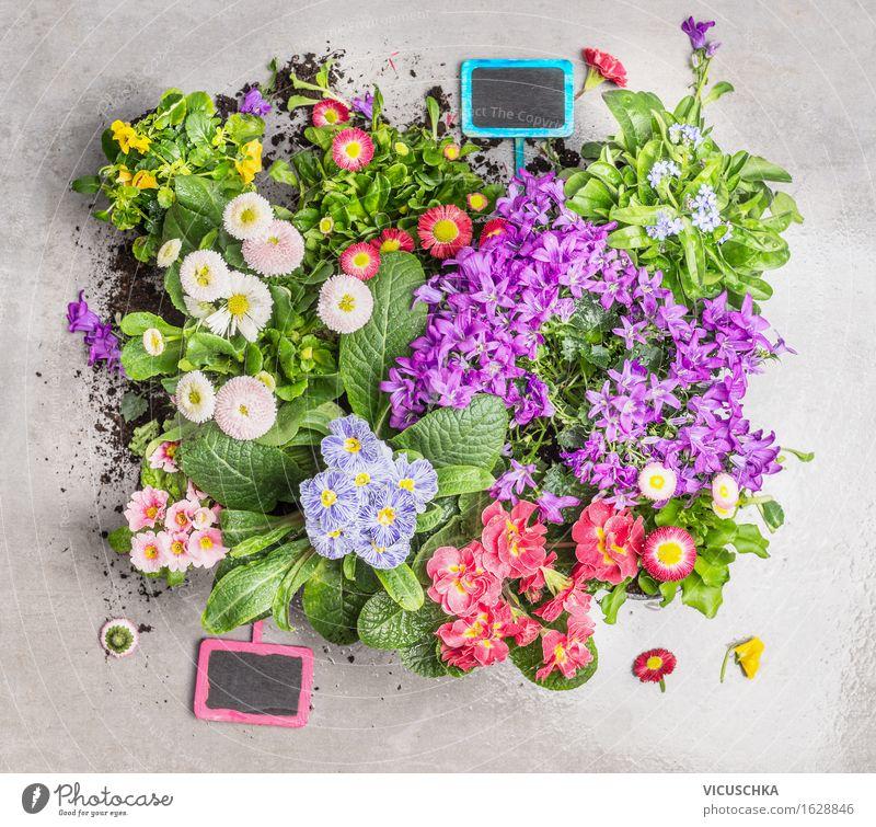 Sommerblumen mit Pflanzenschilder Natur Blume Blatt gelb Blüte Stil Garten rosa Design Häusliches Leben Freizeit & Hobby Dekoration & Verzierung