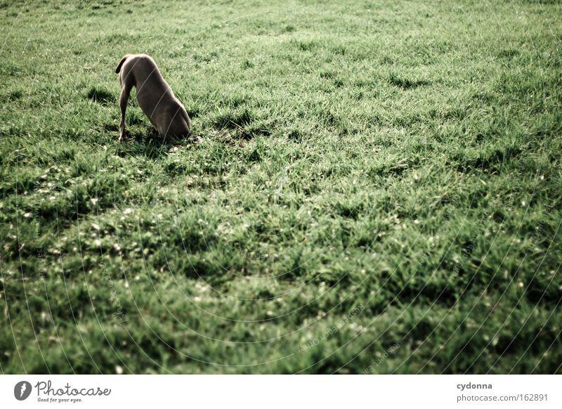 [DD|Apr|09] Verdeckte Ermittlungen Tier Wiese Gras Frühling Hund Zufriedenheit Kraft Nase Suche entdecken Geruch Säugetier finden Intuition kopflos Graben