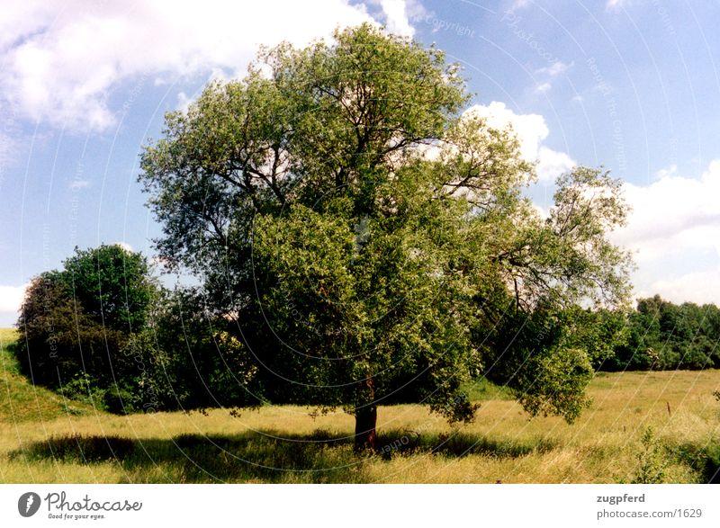 baum_2 Natur Wiese Feld frei