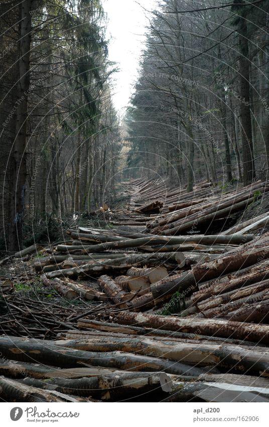 Valentinstag Wald Baum Holz Ast Wege & Pfade Mittelpunkt Natur Waldlichtung Holzhacken Baum fällen geschlossen Waldstück Kahlschlag