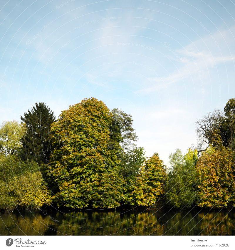 treeberrys Farbfoto mehrfarbig Außenaufnahme Menschenleer Textfreiraum oben Textfreiraum unten Abend Dämmerung Kontrast Reflexion & Spiegelung Sonnenlicht