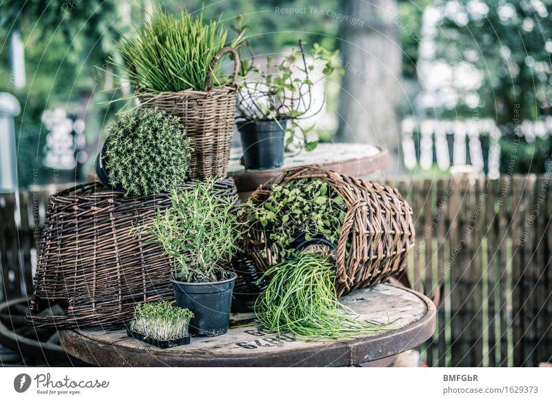 Kräutergarten im Korb grün Gesunde Ernährung Erholung Freude Lifestyle Gesundheit Garten Lebensmittel Zufriedenheit Häusliches Leben Freizeit & Hobby frisch