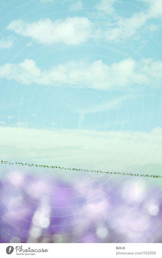 OSTEREIFARBEN-HIMMEL Himmel Natur blau Sommer Wolken Umwelt Frühling träumen Luft Vogel glänzend Horizont Hintergrundbild Wassertropfen Klima Kitsch