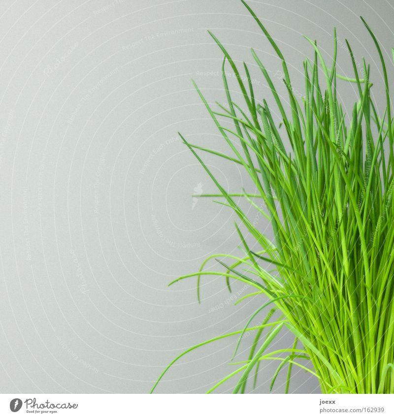 Es grünt das Lauch zu Ostern auch. grün frisch Sträucher Dekoration & Verzierung Kräuter & Gewürze Haushalt Bündel Schnittlauch Porree