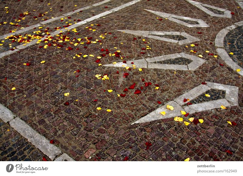 Rosenblätter Sonne Frühling Stein Feste & Feiern Geburtstag Platz Verkehrswege Blütenblatt Pflastersteine Mineralien Mosaik