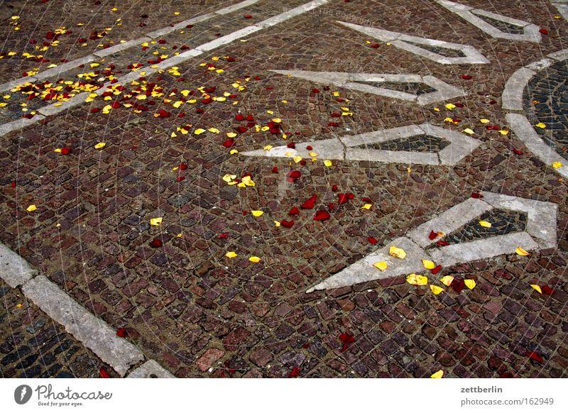 Rosenblätter Sonne Sonnenstrahlen Blütenblatt Feste & Feiern Geburtstag Frühling Mosaik Platz Verkehrswege Stein Mineralien brautzug Pflastersteine