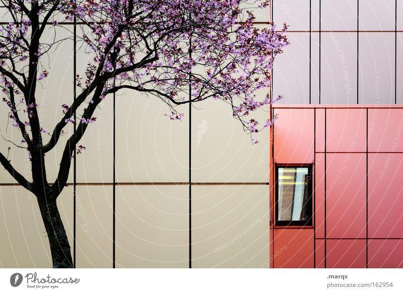 Purple Natur schön Baum Pflanze rot Umwelt Fenster Gefühle Architektur Blüte Linie Hintergrundbild Fassade Klima ästhetisch Ast