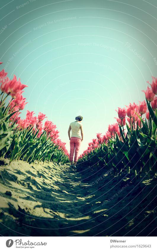 Frau Antje aus Holland IV elegant Design schön Körper Sommer feminin Junge Frau Jugendliche 1 Mensch 18-30 Jahre Erwachsene Umwelt Natur Pflanze Himmel Horizont