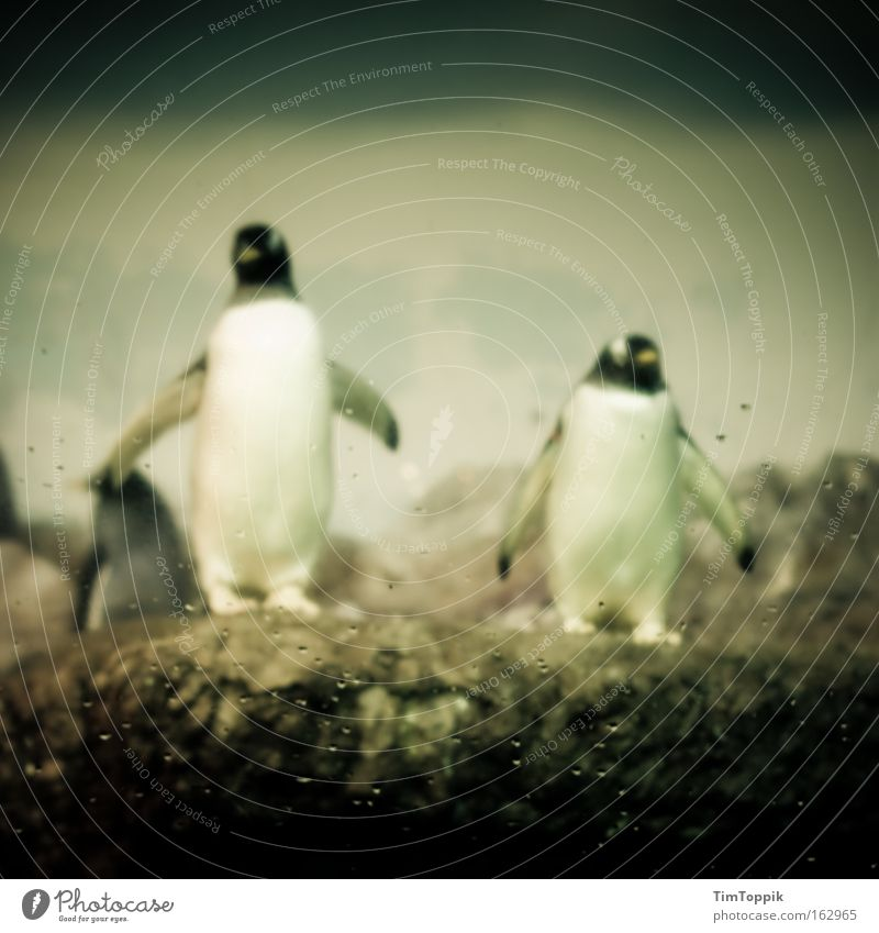 Check complete Tier Suche Team Zoo Säugetier Pinguin Flosse Antarktis Tiergarten Kaiserpinguine