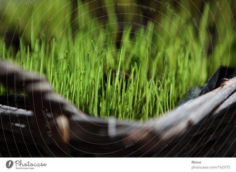 es grünt so grün Pflanze Gras Frühling Erde Dekoration & Verzierung Rasen Halm Samen Korb Trieb säen netzartig