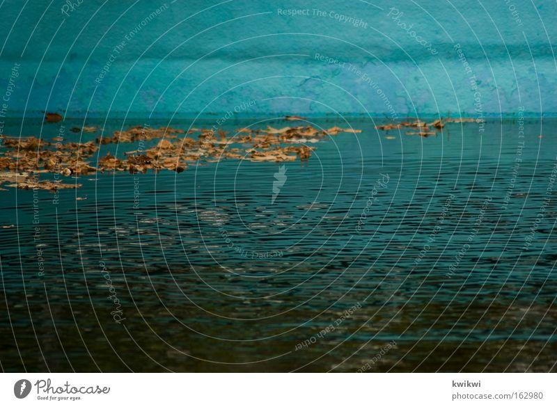 pool II Wasser Blatt Spielen dreckig nass Zeit Schwimmbad tauchen Vergänglichkeit verfallen Verfall Leiter Algen Freibad