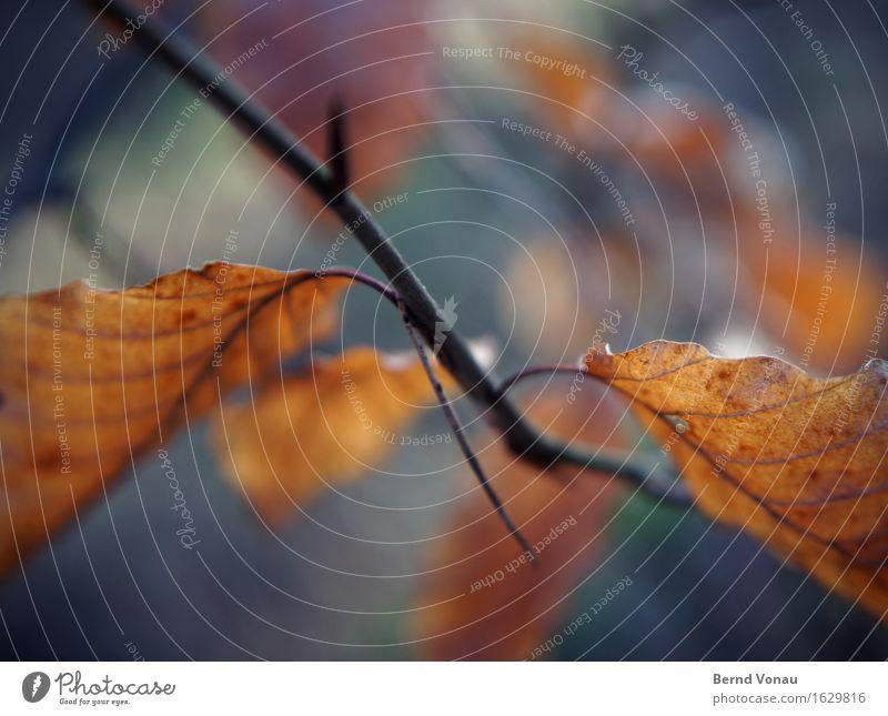 zweig Umwelt Natur Pflanze Baum schön braun blau grün Blatt Ast Zweig Herbst Unschärfe Tod Farbfoto Außenaufnahme Nahaufnahme Menschenleer Tag Sonnenlicht