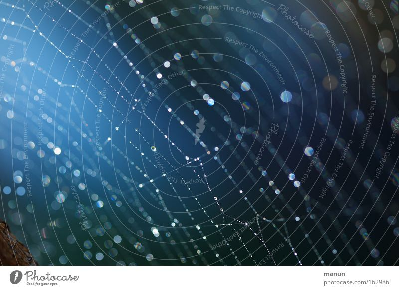 latent gefährlich Natur blau Tier ruhig Erholung Stil glänzend Design Wassertropfen gefährlich planen leuchten Netzwerk Tropfen fangen Netz