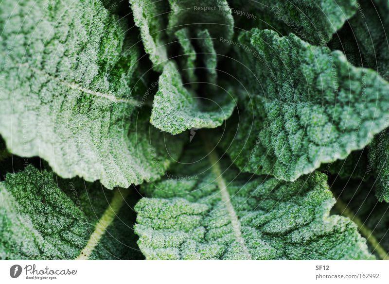 Morgenreif grün Bewegung Salat Essig Öl Kräuterhexe Pfeffer Gesundheit