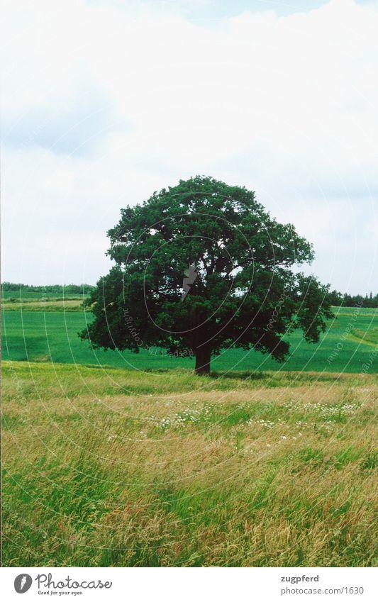 baum_3 Baum Wiese Feld