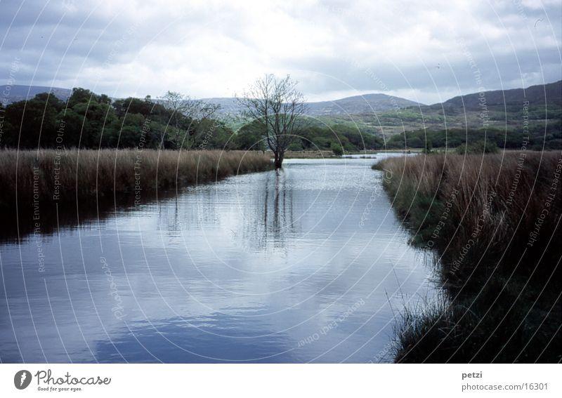 Friedliche Landschaft in Irland Baum grün blau ruhig Wolken Berge u. Gebirge Idylle Bach bedecken