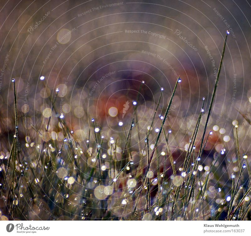 Ungeahnter Reichtum Tau Wasser Rasen Gras Sonnenlicht glänzend Reflexion & Spiegelung mehrfarbig Frühling Sommer Prisma heiter Makroaufnahme
