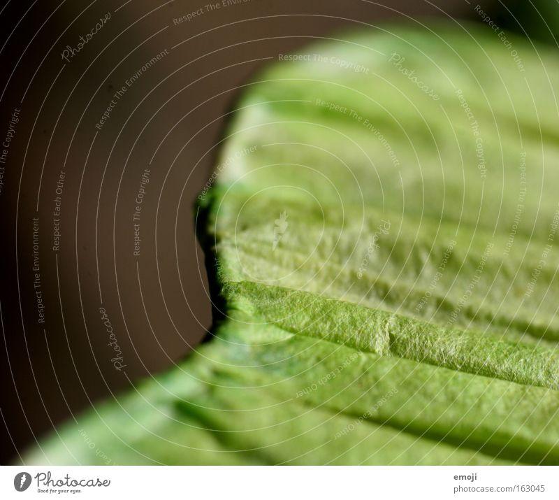 - Makroaufnahme grün Furche Muster Streifen Detailaufnahme Nahaufnahme Strukturen & Formen