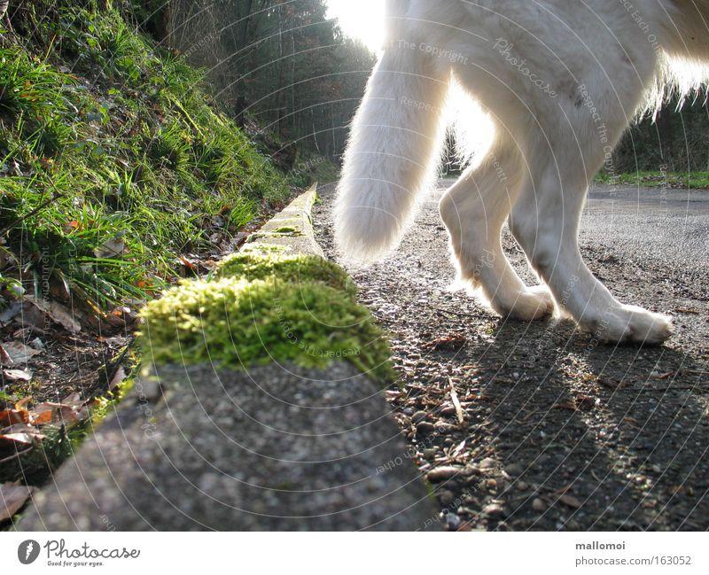 alles hat ein ende Einsamkeit Straße Gras Hund Angst gehen gefährlich Gesäß Ende Hinterteil Säugetier Pfote Panik Am Rand Haustier Schwanz