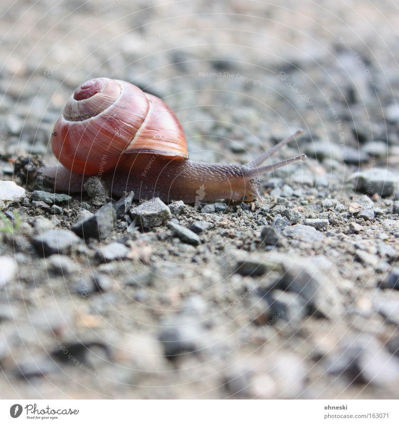 Ruhrpott-Schnecke Stein Laufsport Asphalt Rennsport anstrengen Glätte krabbeln Schwäche Fühler langsam Weichtier Schneckenhaus Sportveranstaltung