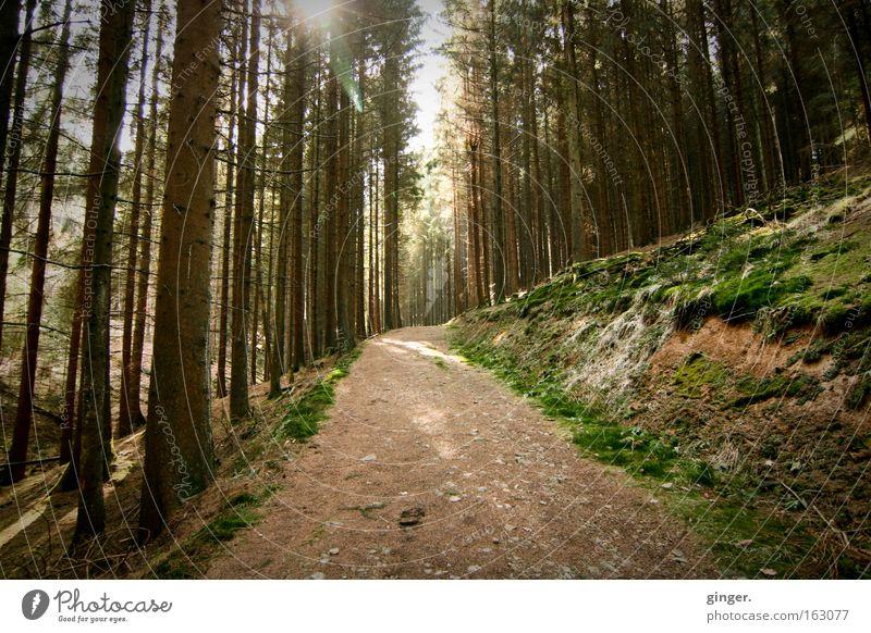 Waldspaziergang ruhig Natur Landschaft Pflanze Erde Frühling Schönes Wetter Baum Moos Wildpflanze Hügel Wege & Pfade Holz Bewegung Erholung Wachstum braun grün