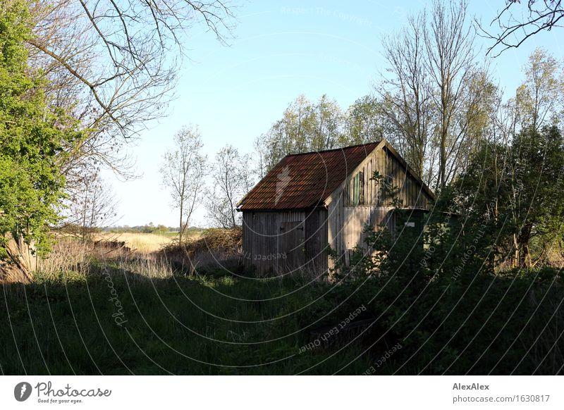 nicht so wild Ausflug Haus Garten Scheune Holzhaus Natur Landschaft Pflanze Wolkenloser Himmel Frühling Schönes Wetter Baum Gras Sträucher Wiese Feld Idylle