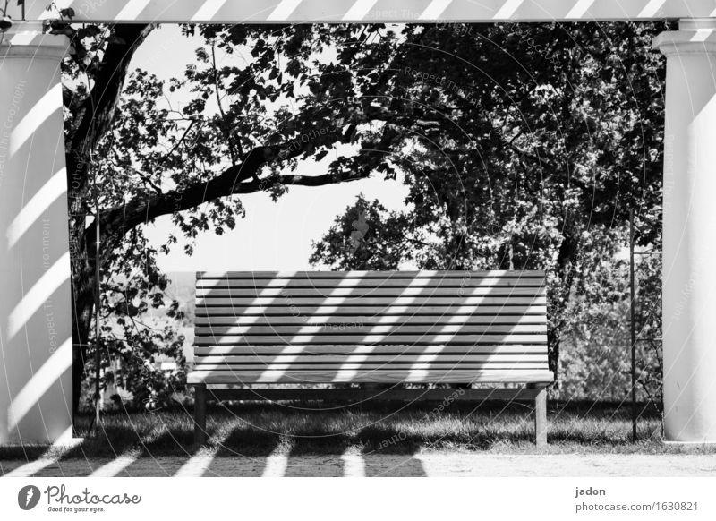 streiflichter. Baum ruhig Umwelt Frühling Stil Garten Design Park Dekoration & Verzierung sitzen Sträucher Schönes Wetter Streifen Bank Möbel trashig