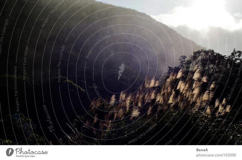 Regen Sommer Sonne Berge u. Gebirge Natur Pflanze Wassertropfen Baum Wald frisch Schilfrohr Taiwan Gegenlicht