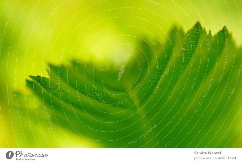 Blattgrün Natur Pflanze Sommer Baum Tier Wald Umwelt Frühling Garten Park Umweltschutz Buche Buchenwald