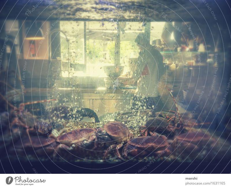 welcher soll es sein?! Lebensmittel Ernährung Essen Stimmung Markt Markthalle Lissabon foodcourt Krebstier Tier Krabbe Aquarium kochen & garen Küche