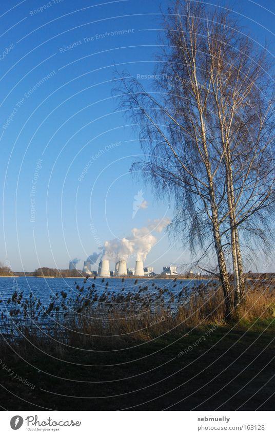 Energielandschaft Natur Wasser Baum See Landschaft Industrie Energiewirtschaft Elektrizität Idylle Stromkraftwerke Cottbus Birke Brandenburg Braunkohle Kühlturm