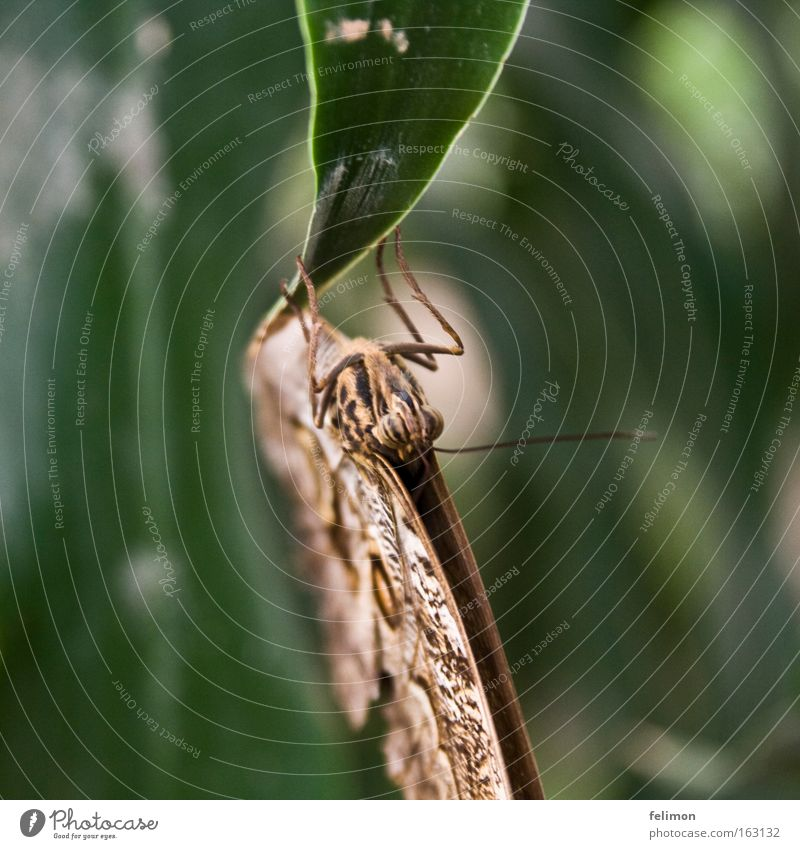 kopfunter Insekt nah Blatt Natur Fühler zart fein shmetterling
