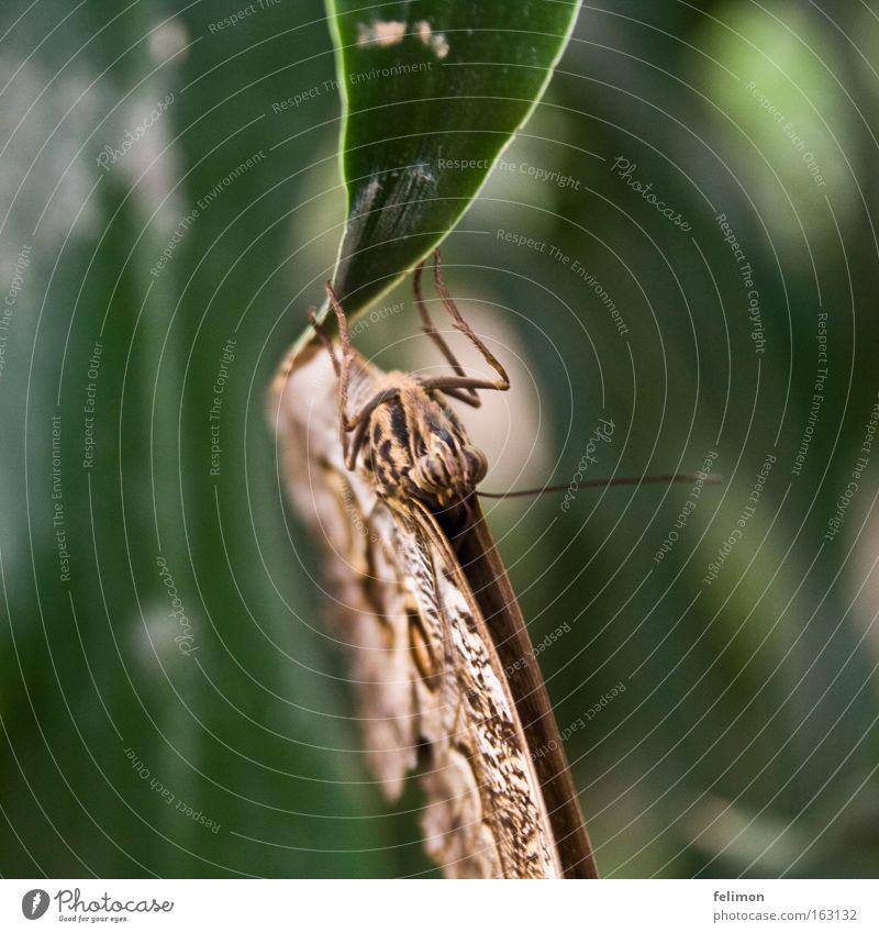 kopfunter Natur Blatt nah Insekt zart fein Fühler
