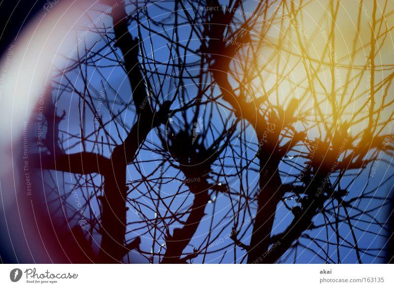 Good Day Sunshine Himmel Baum Sonne Perspektive Ecke rund himmelblau Apfelbaum Laubbaum