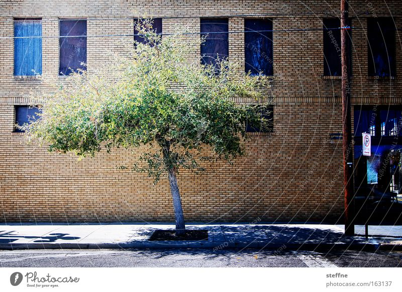 baum Baum Stadt Sommer Haus Straße Fenster hell Fassade heiß Verkehrswege