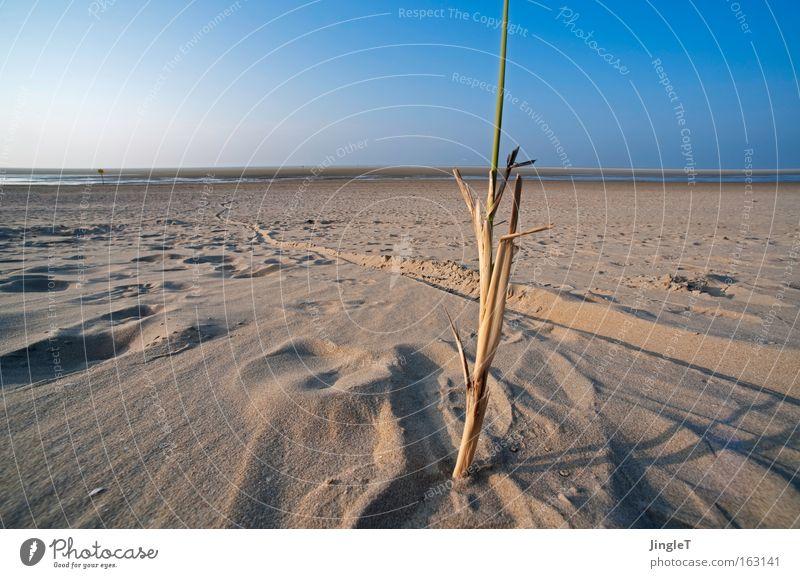 Alleinstellungsmerkmal Himmel Meer Strand Ferien & Urlaub & Reisen Ferne Erholung Sand Küste Spuren einzigartig Unendlichkeit Halm Nordsee Niederlande Ameland Dünengras