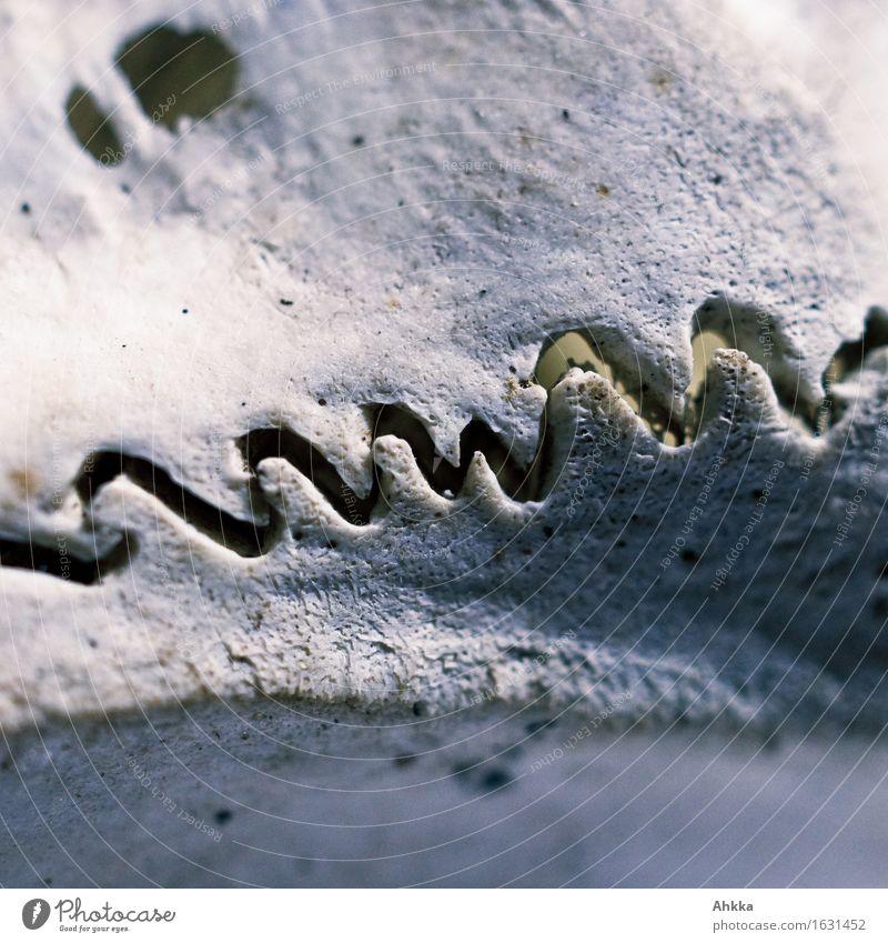 Bruchstelle dunkel Wege & Pfade wild Kraft Wildtier gefährlich bedrohlich Vergänglichkeit Wandel & Veränderung Zusammenhalt Risiko Schmerz Verfall Stress