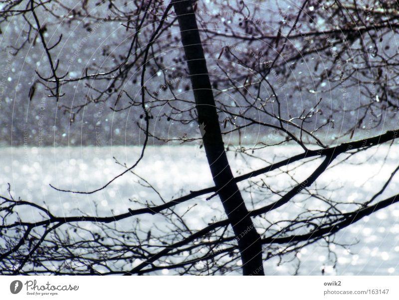 Aprilmorgen Farbfoto Gedeckte Farben Detailaufnahme abstrakt Menschenleer Tag Kontrast Silhouette Gegenlicht Starke Tiefenschärfe Schnee Umwelt Natur Landschaft