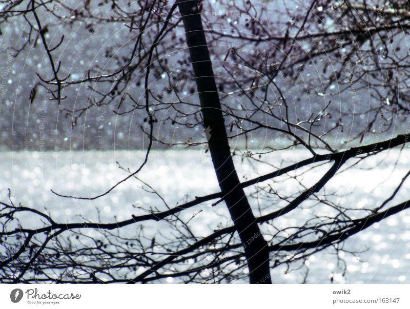 Aprilmorgen Natur Wasser weiß Baum blau Pflanze Schnee Frühling Holz Schneefall See Regen Landschaft glänzend Wetter